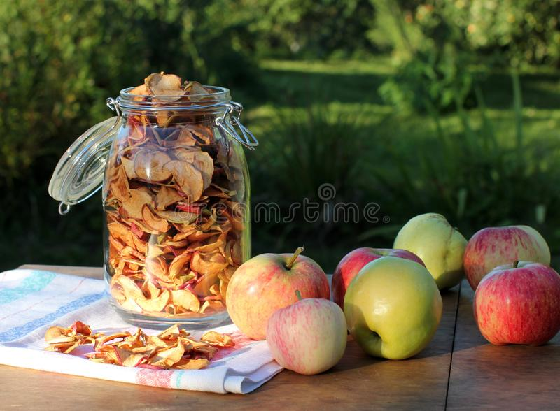 Dried apples in glass jar, fresh green and red apples stock photography