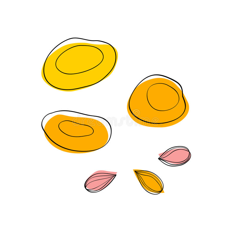 Dried apricots and apricot seeds. Vector set Dried apricots and apricot seeds stock illustration
