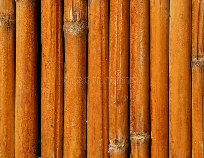 Dried bamboo reeds. Background of dried bamboo reeds royalty free stock photo