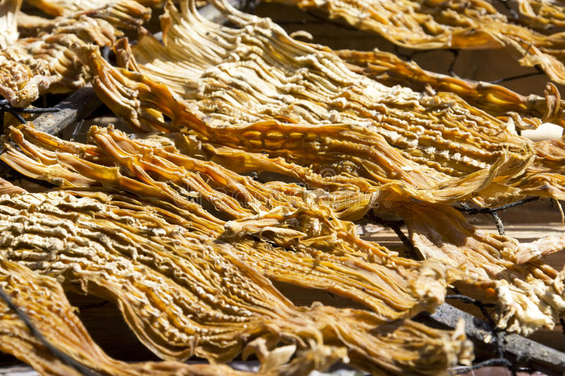 Download Dried Bamboo Shoots stock photo. Image of shoot, asia - 10508194