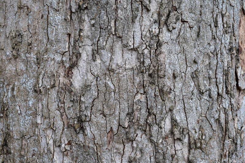 The dried bark stock photos