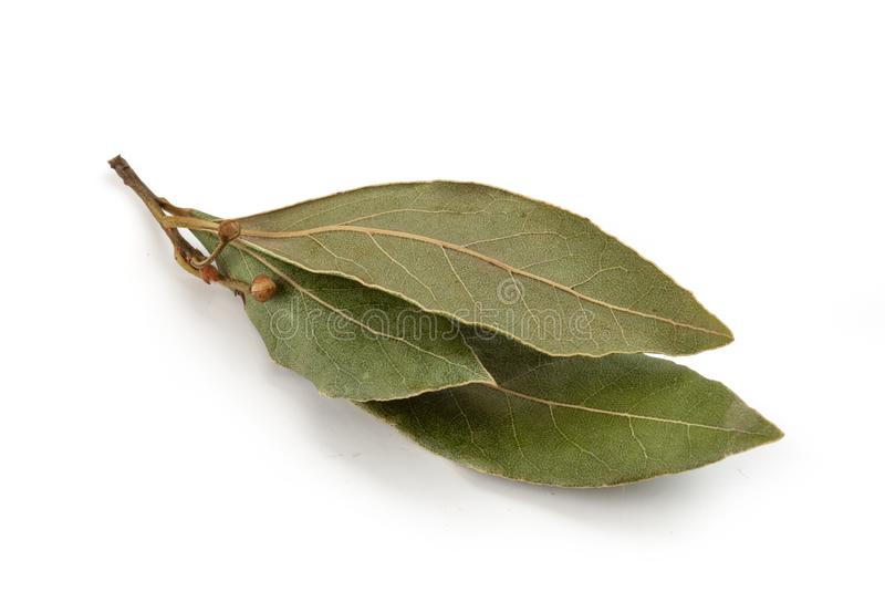 Dried bay leaf. Dried branch of bay leaf on the white background royalty free stock image