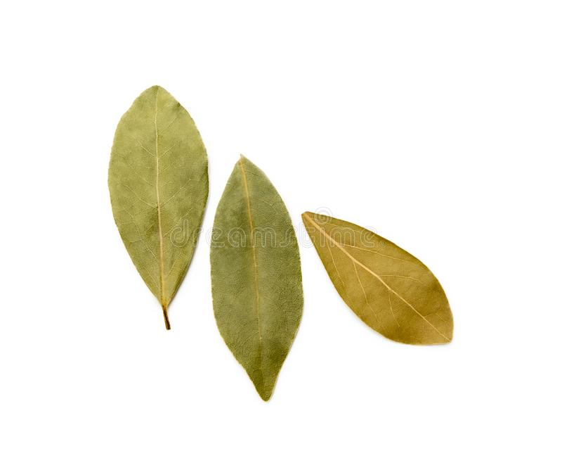 Dried bay leaf stock photos