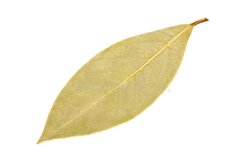 Dried bay leaf isolated on white background stock photography