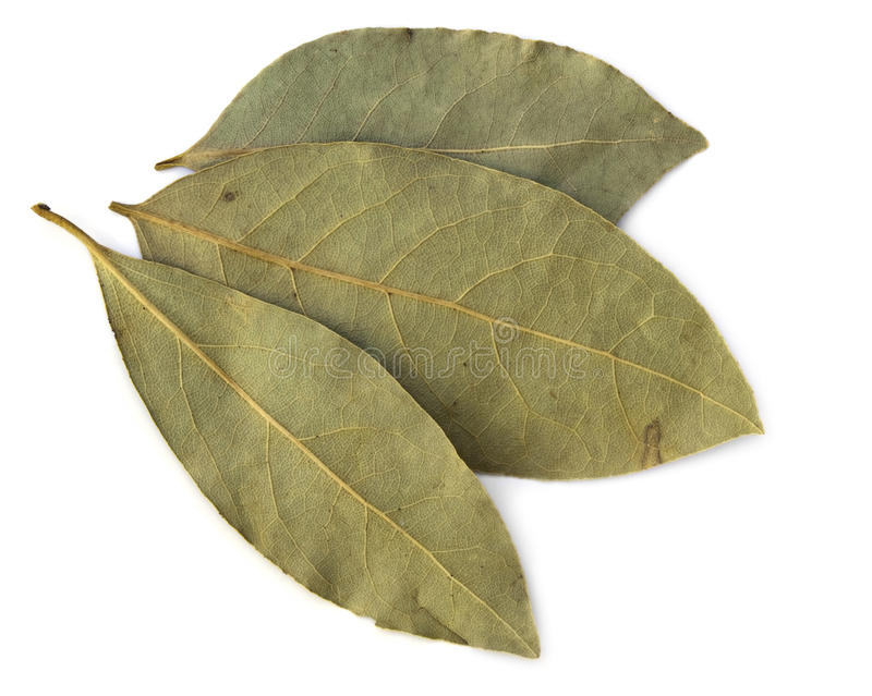 Download Dried Bay leaves stock image. Image of spice, three, macro - 14860973