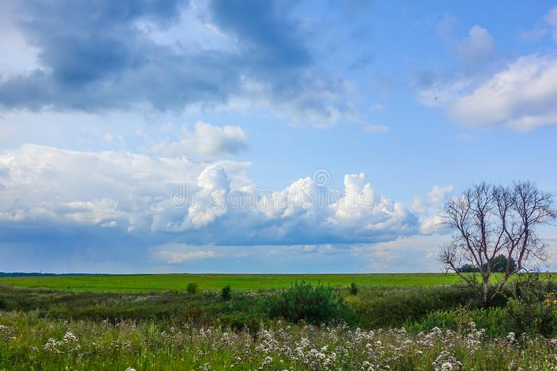 The dried big lonely tree on a green field. The sky with clouds. Russia.  stock photo
