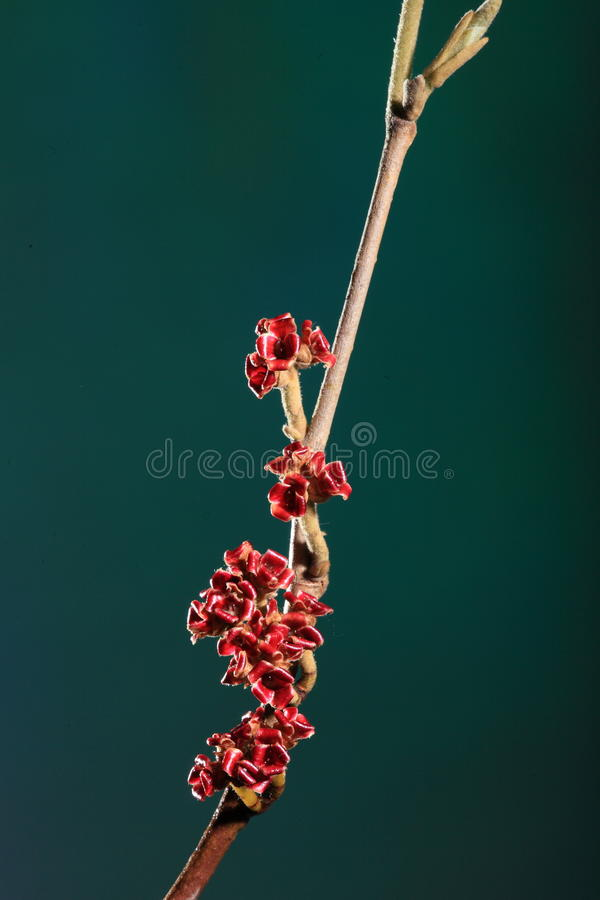 Download Dried blossom on branch stock photo. Image of nature - 13871680