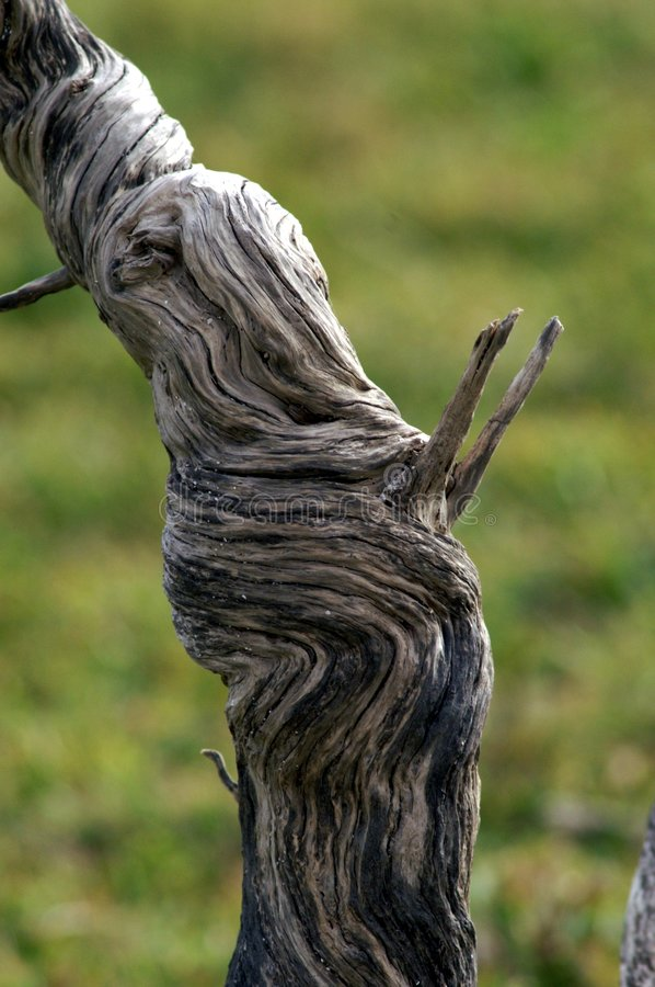 Dried branch stock photos