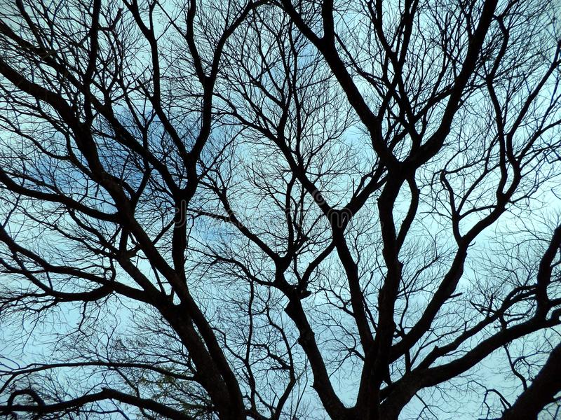 Dried branches tree royalty free stock images