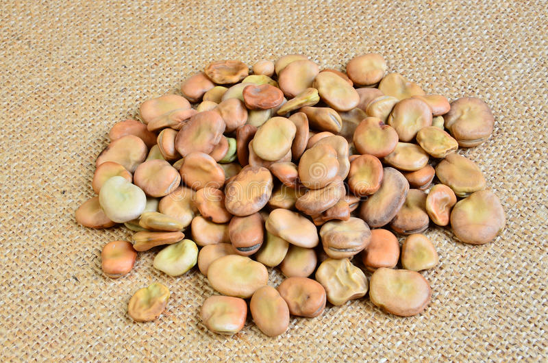 Download Dried broad bean stock image. Image of fabric, fava, bean - 17815403