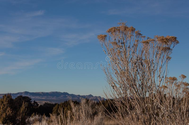 Dried brush on rural New Mexico hillside, distant mountains, winter American Southwest. Horizontal aspect stock photos