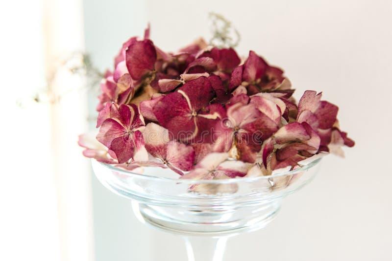 Dried Burgundy Hydrangea Flowers in Glass Vase Interior Decoration. stock image
