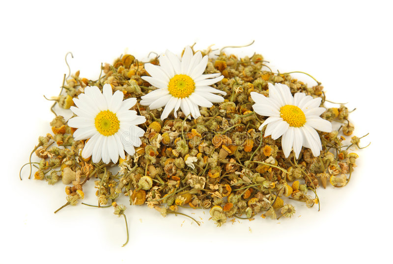 Dried camomile tea royalty free stock photos