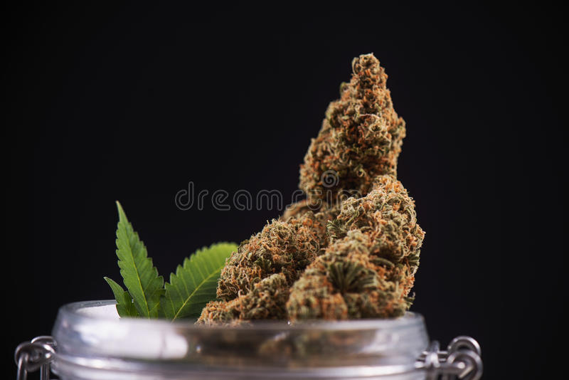 Dried cannabis buds & x28;green crack strain& x29; on a glass jar - medica. Macro detail of dried cannabis buds & x28;green crack strain& x29; on a glass jar stock images