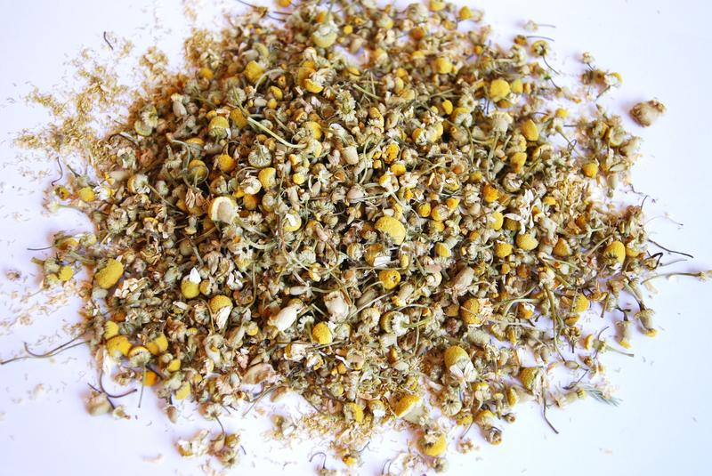 Dried Chamomile royalty free stock photography