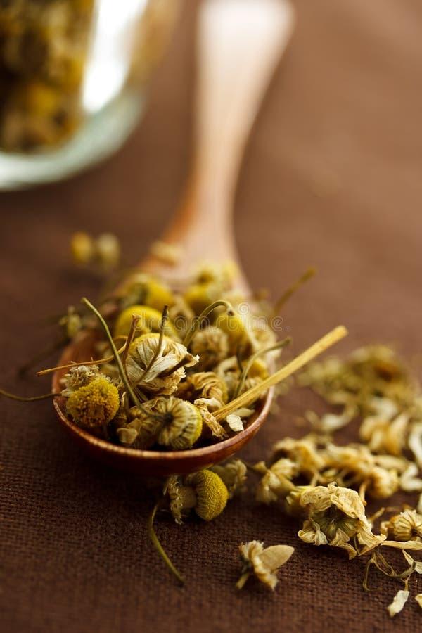 Dried chamomile stock photos