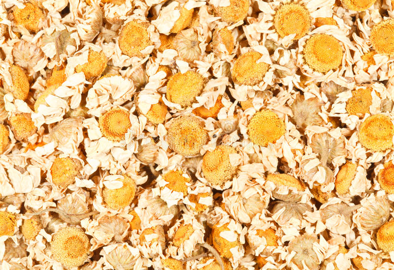 Dried Chamomile Flowers royalty free stock images