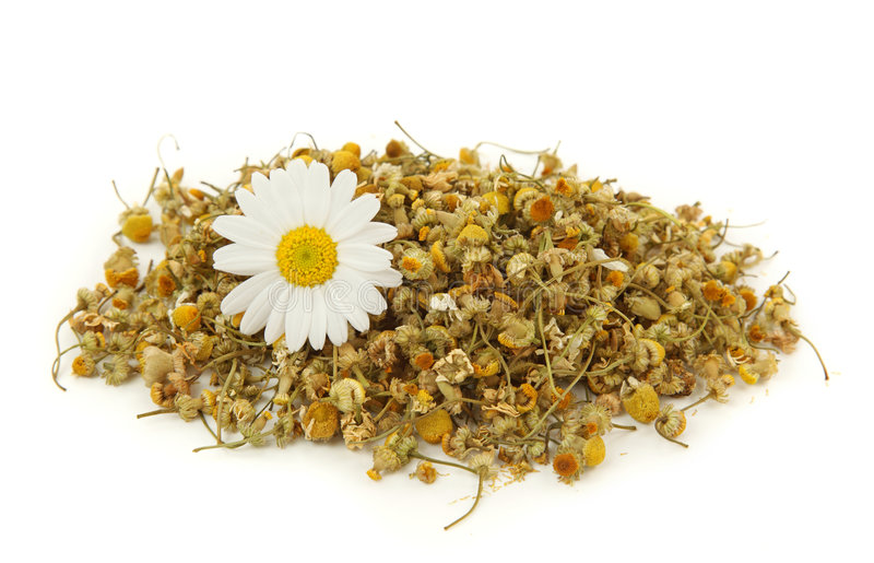 Dried chamomile tea royalty free stock photos