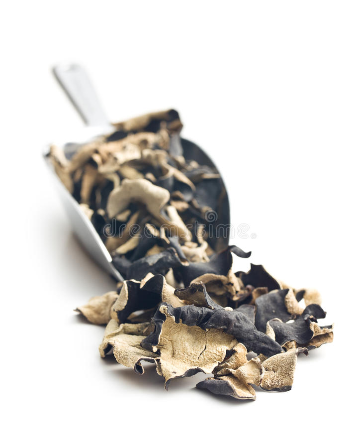 Dried chinese black fungus. Jelly ear royalty free stock images