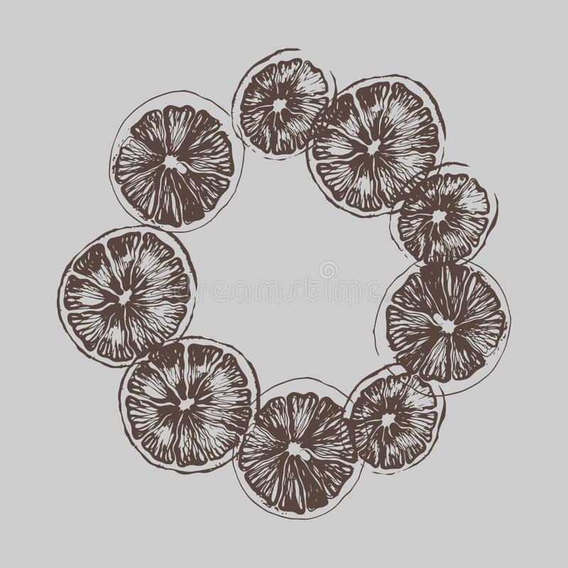 Dried citrus fruits. In a circle vector illustration