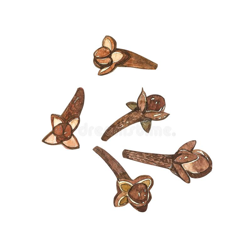 Dried Cloves botanical illustration of flowers and leaves. Collection of tonic and spicy plants. Hand drawn spices. Illustrations stock illustration