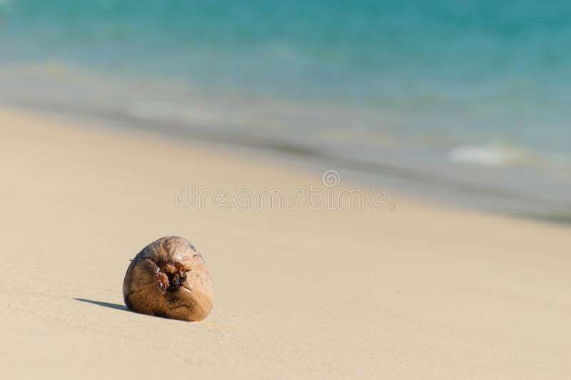 Dried coconut seed on the beach royalty free stock photo