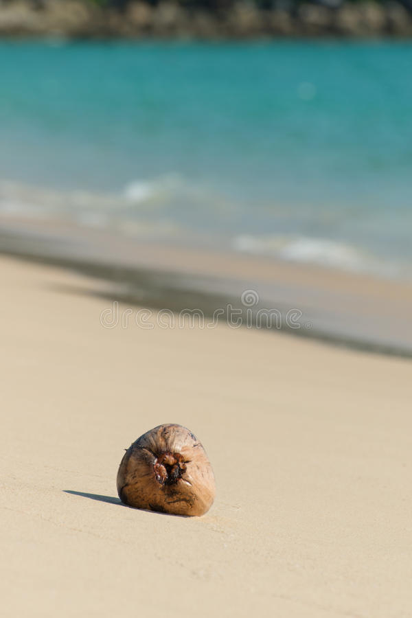 Dried coconut seed on the beach stock photo