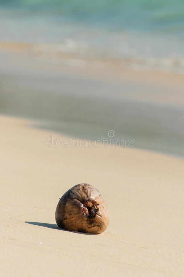 Dried coconut seed on the beach royalty free stock images