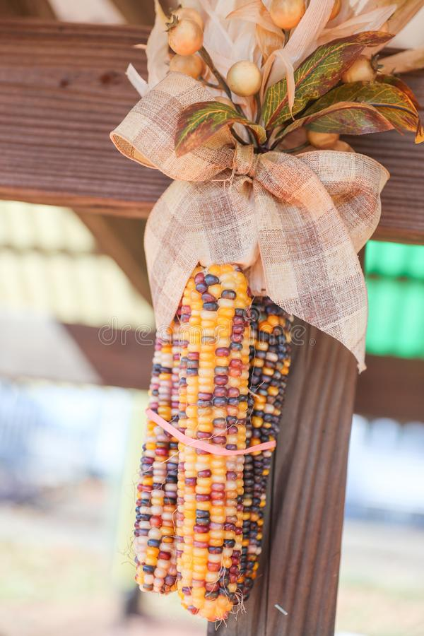 Dried corn tied with rope Wooden wall hanging stock photos
