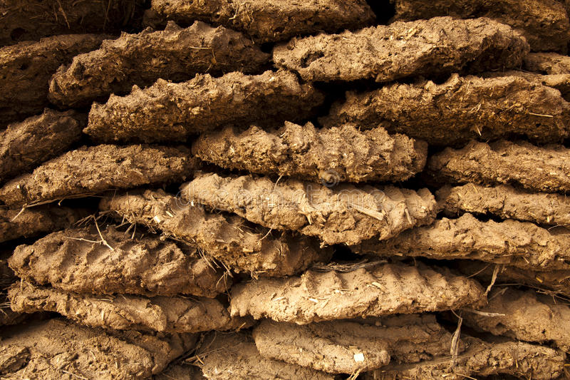 Dried Cow Dung Fuel. Close up of dried Cow Dung pats used for sustaining fires in India royalty free stock images
