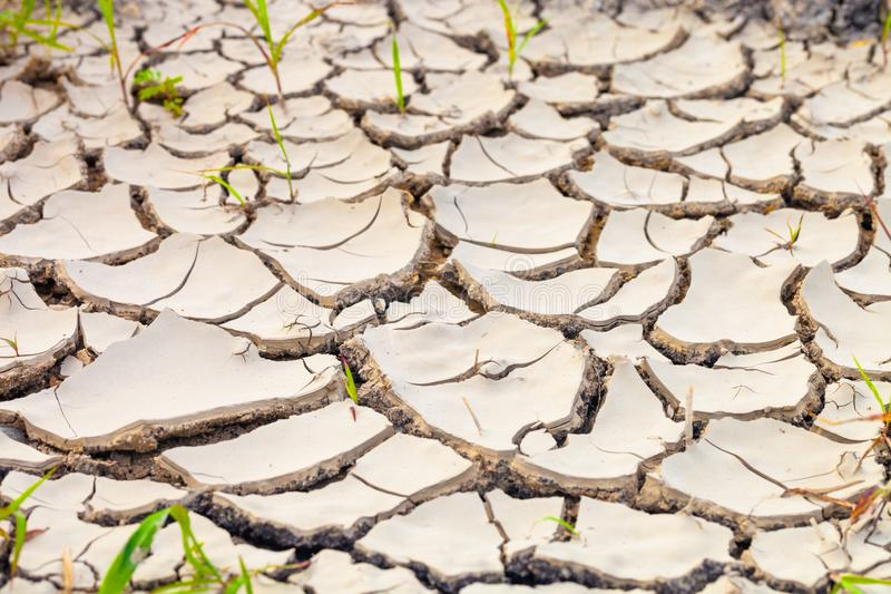 Dried and cracked earth pattern, drought concept. Dried and cracked earth pattern, drought and climate change concept royalty free stock photos