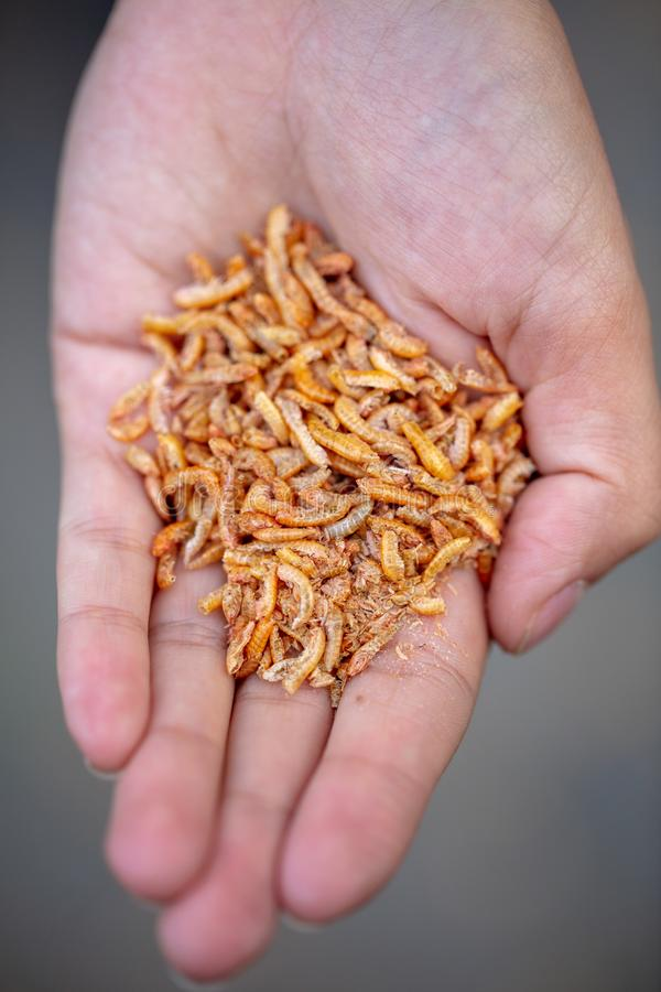 Dried crustaceans as food for birds in hand.  stock photo