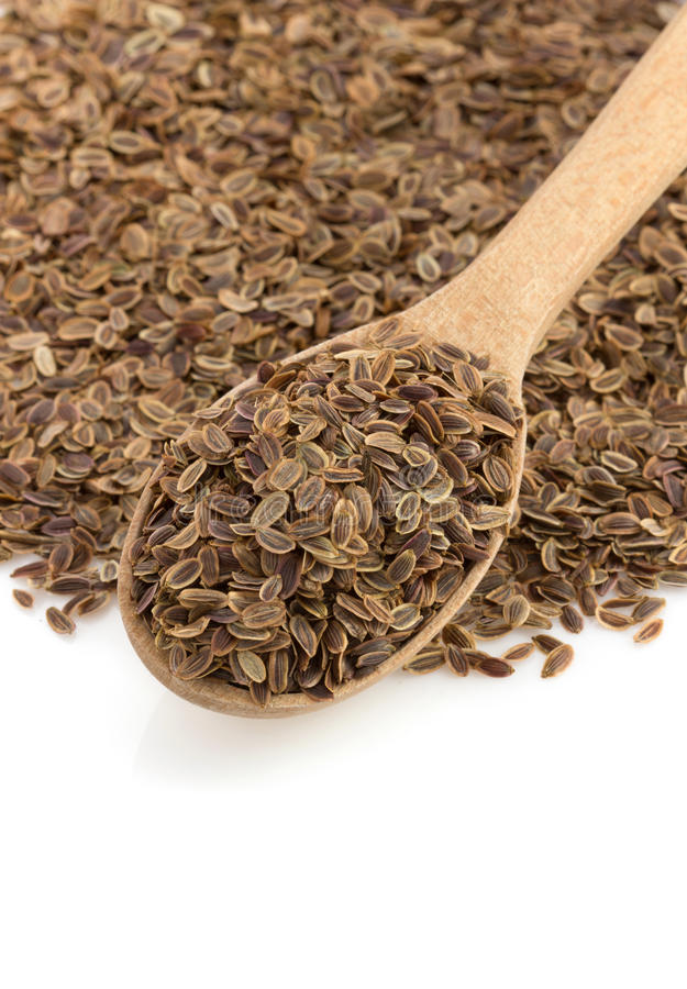 Dried dill seeds in spoon. On white background stock photo