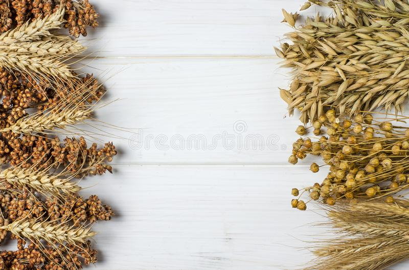 Dried ears of wheat, oats and other grains lie on a white background wood stock photo