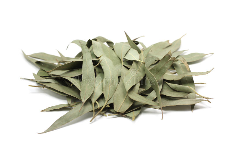 Dried eucalyptus leaves. On a white background royalty free stock photo