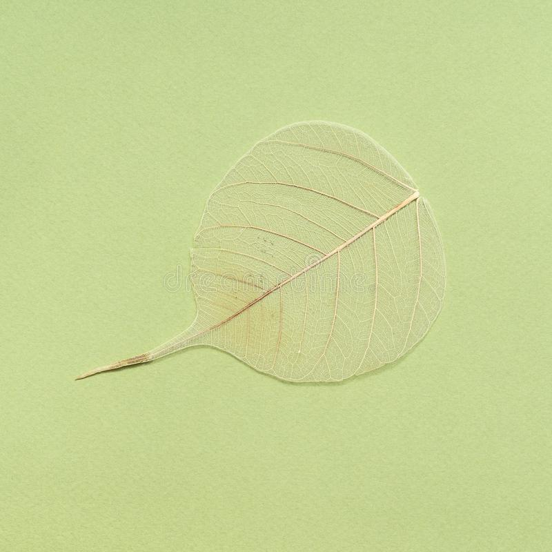 dried fallen leaf on green olive background royalty free stock photos