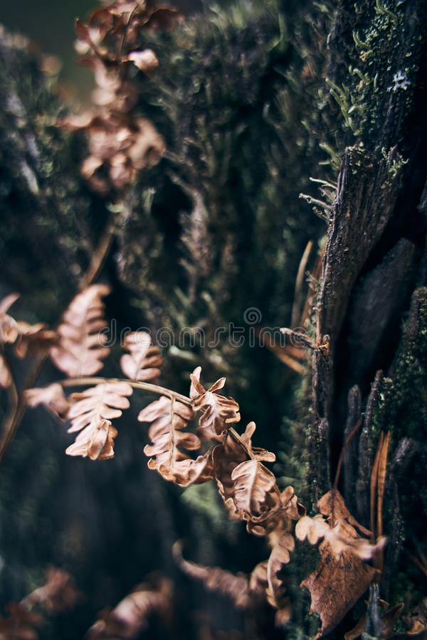 Dried fern leaves and green moss on an old stump. royalty free stock image