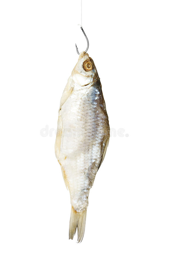 Dried fish on the fishing hook royalty free stock photos