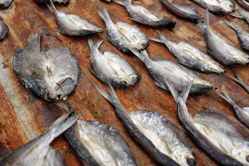 Download Dried fish stock photo. Image of asia, restaurant, gourmet - 33003364