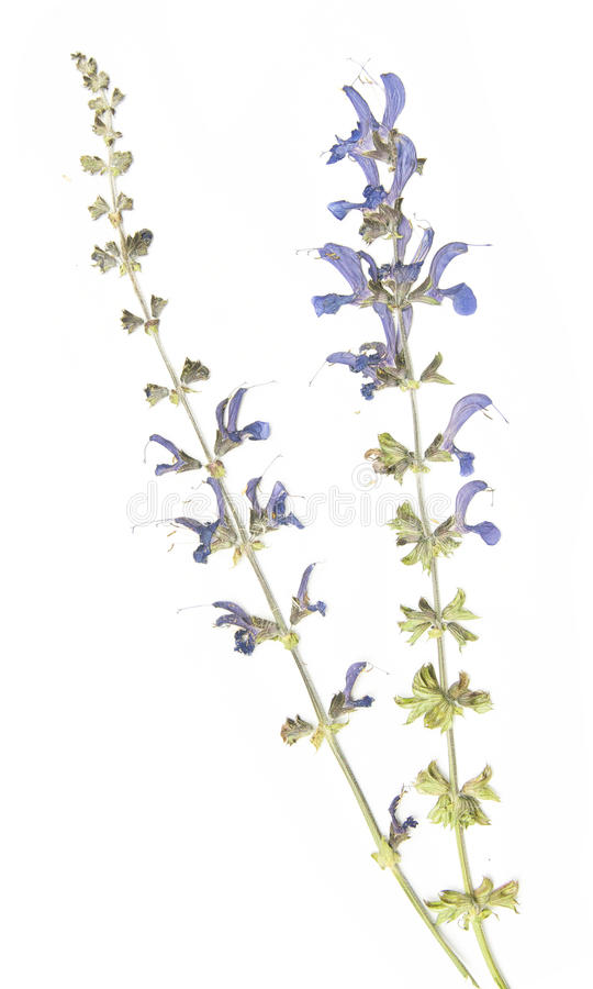 Download Dried Flora Royalty Free Stock Images - Image: 22273259