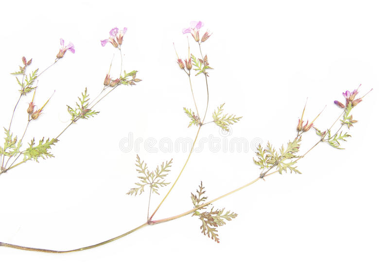 Download Dried flora stock photo. Image of buds, background, organic - 22273264