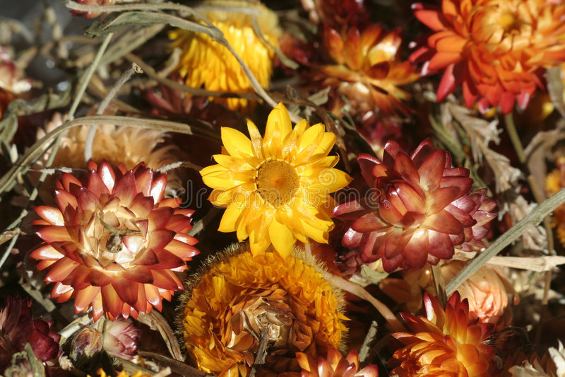 Dried flowers royalty free stock images