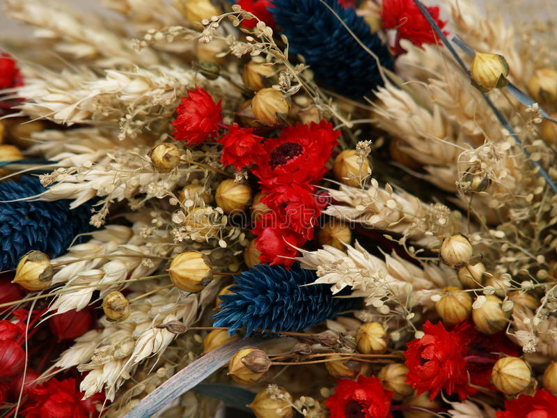 Dried Flowers Royalty Free Stock Photo
