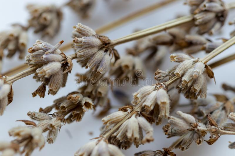 Dried flowers with branches Lavender stock photo