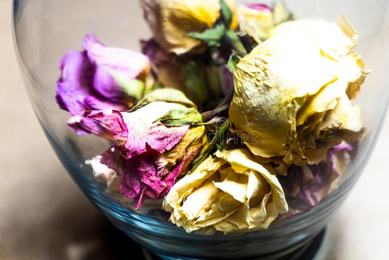 Dried flowers in a glass vase stock photography
