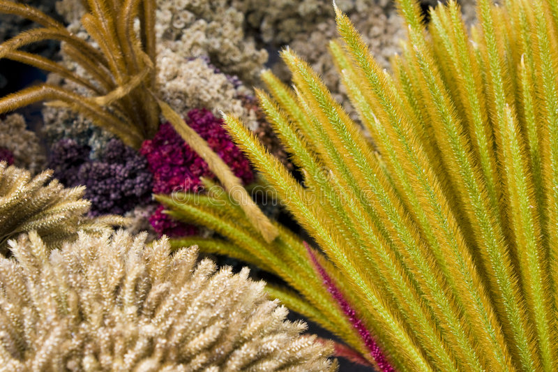 Dried Flowers and Grass of Mount Merapi, Indonesia. Coral like local dried flowers and grass collected and sold by vendors at the foot of Mount Merapi stock photo