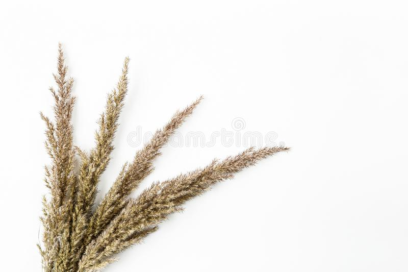 Dried flowers and grass on a white background, flat lay composition, top view royalty free stock photos