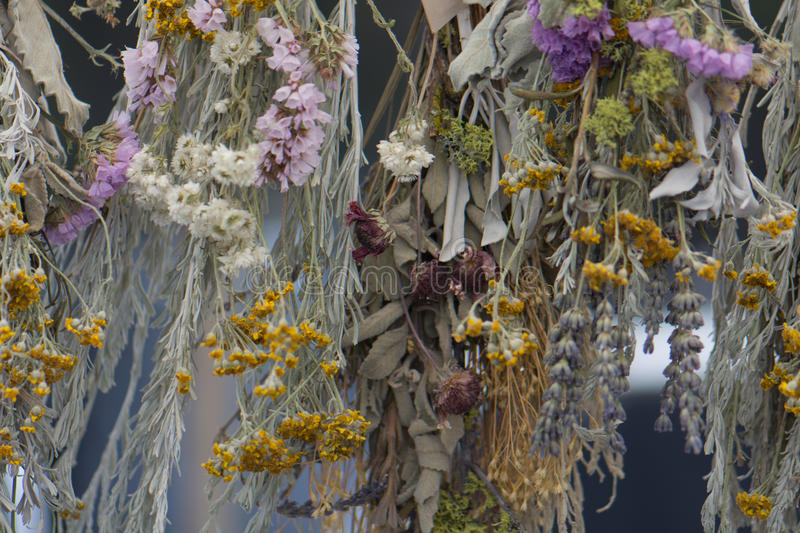 Dried Flowers and Herbs Hanging. Upside down: statice, lavender, white sage, sagebrush, golden yarrow, pearly everlasting, and brown-eyed wolf lichen stock photo