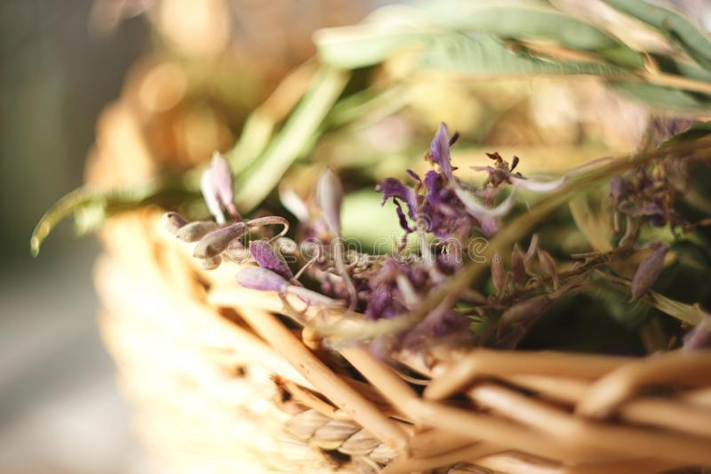 Dried flowers and leaves of willow-herb lie in a wicker basket royalty free stock photos