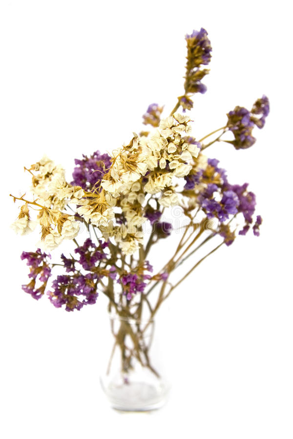 Dried flowers in a vase stock photography